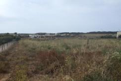 Struttura pilastrata con 5000 mq terreno